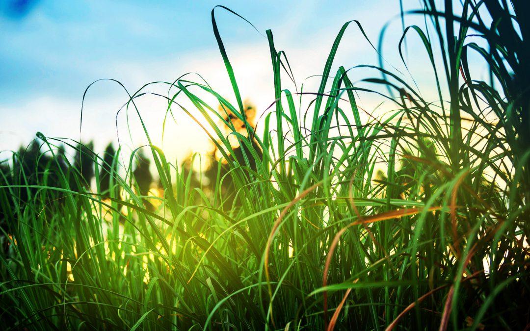 Opinião – Combate à poluição será prioridade em saúde
