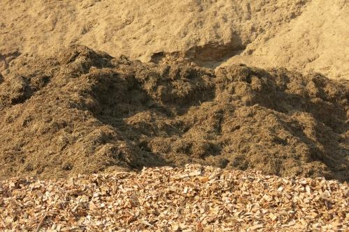 Biomassa da cana vende mais que solar em leilão A-6