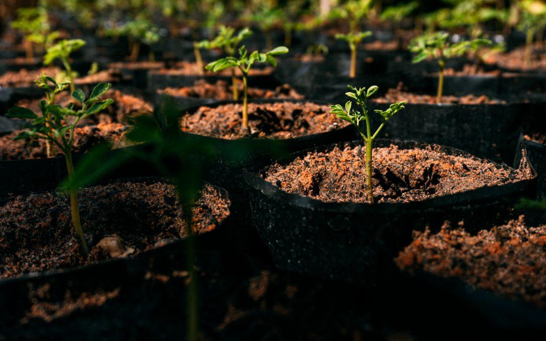 COP 25: Setor já reflorestou mais de 200 mil hectares de mata