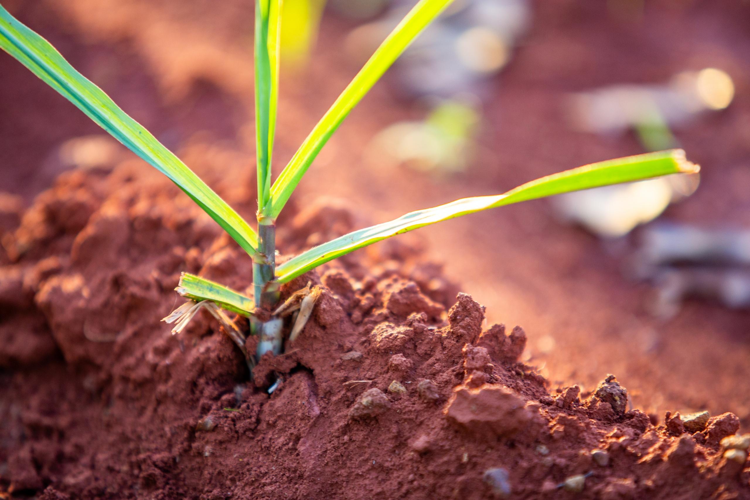 Opinião – Bioenergia e bioeconomia: é preciso manter o rumo certo