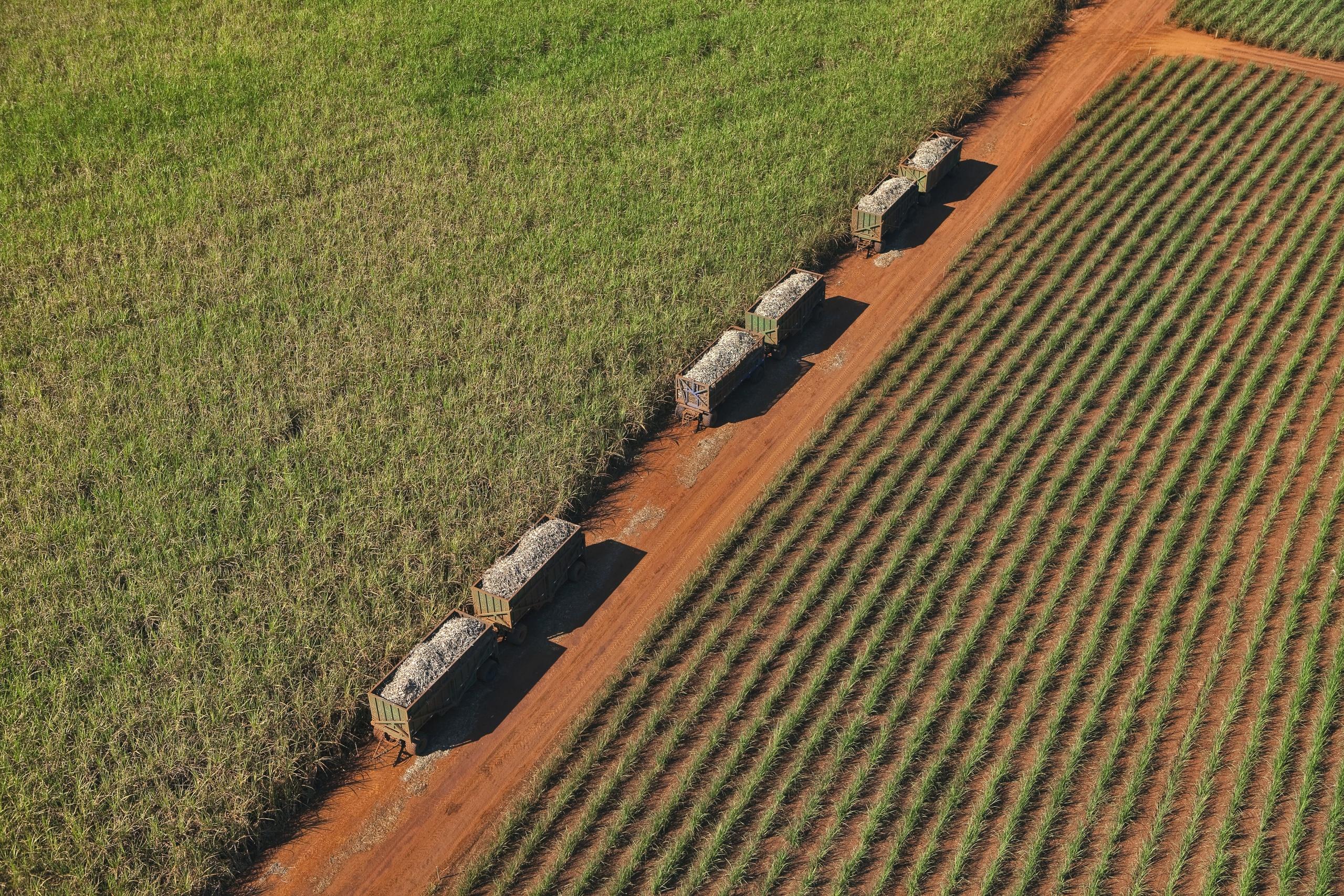 Moagem de cana-de-açúcar totaliza 42,93 milhões de toneladas na segunda quinzena de junho
