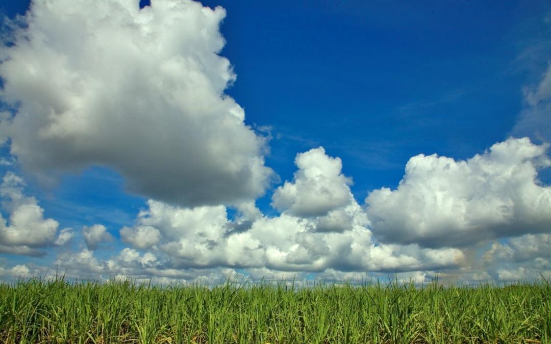 UNICA, CTC, TempoCampo e LINEAR lançam relatório com condições de colheita e clima