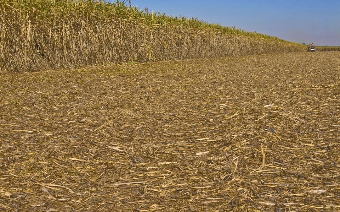 Cana Zoom: produtividade agrícola atinge85 ton por hectare