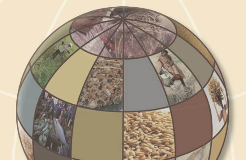 Addressing the Global Food Crisis: Key trade, investment and commodity policies in ensuring sustainable food security and alleviating poverty