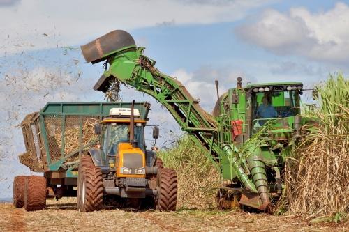 Colheita mecanizada de cana de açúcar para moagem