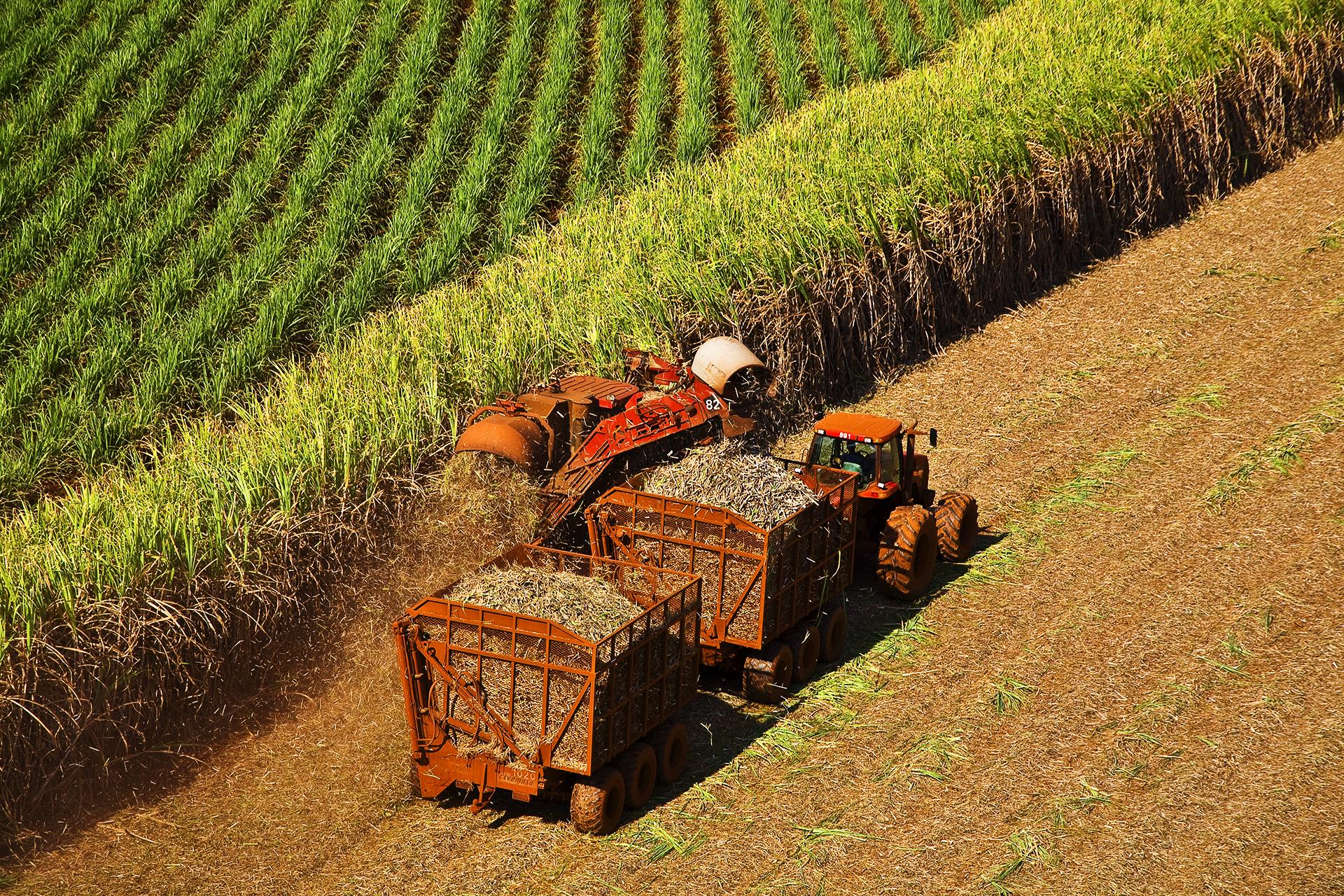 Moagem de cana-de-açúcar registra retração em abril